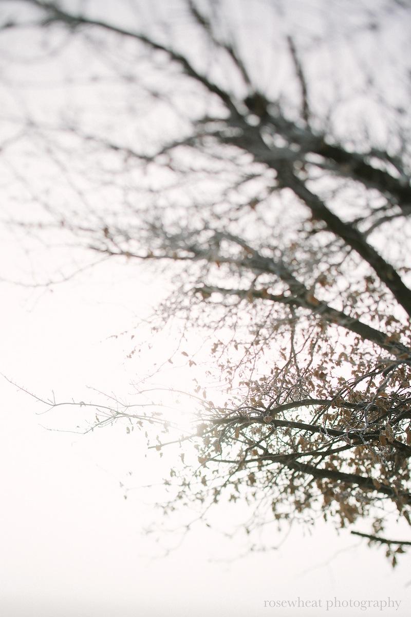 TiftShiftTrees-1.jpg