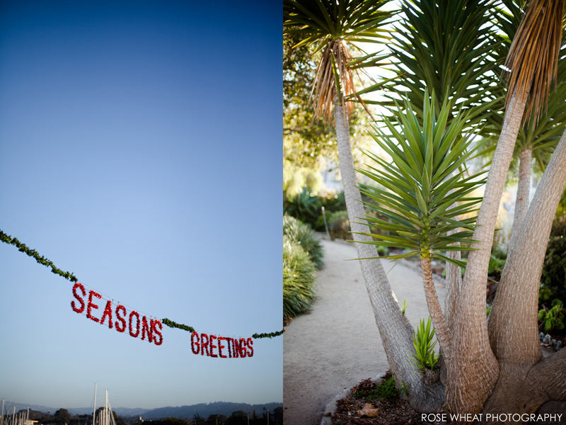 27. Christmas_Monterey_Fisherman's_Wharf_Rose_Wheat_Photography_Emma_Wheatley.jpg