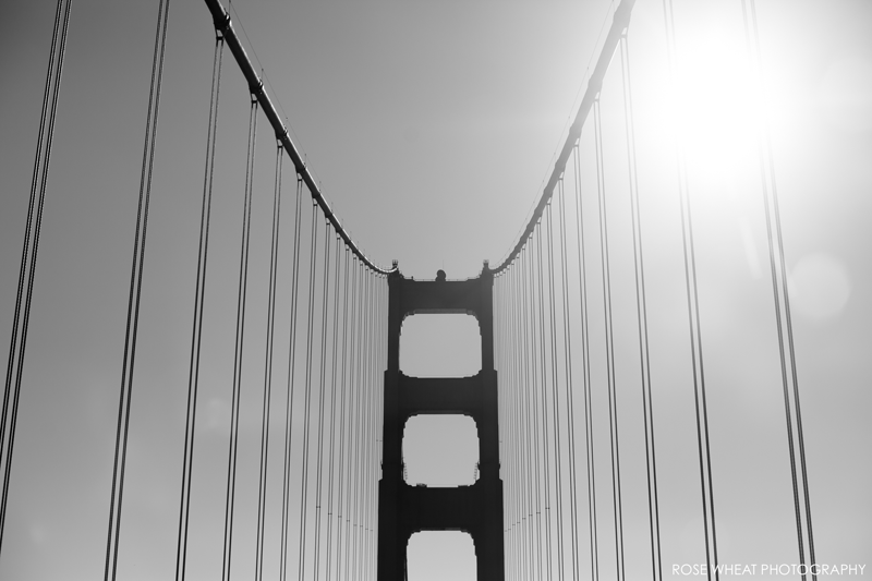 12.-Golden_Gate_Bridge_Black_White_rose_Wheat_Photogrpahy.png