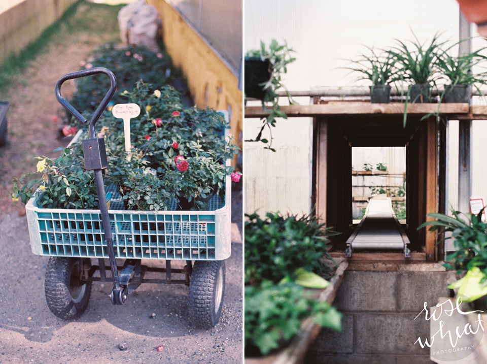 18. Ann's_Greenhouses_Fairbanks_alaska.jpg