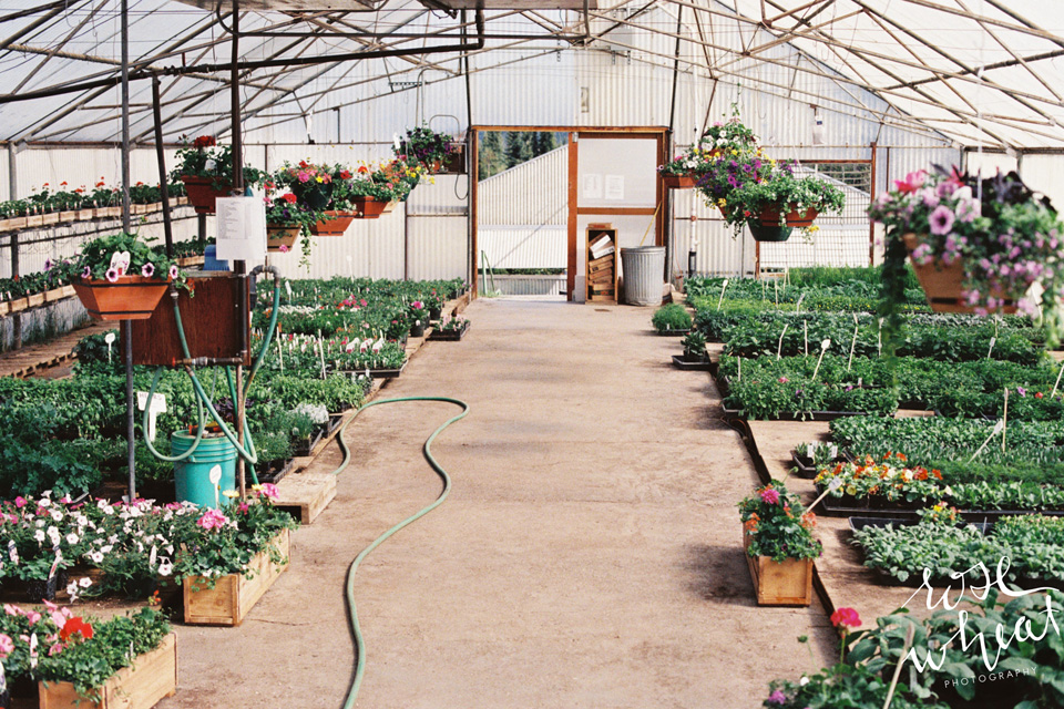 19. Ann's_Greenhouses_Fairbanks_alaska.jpg