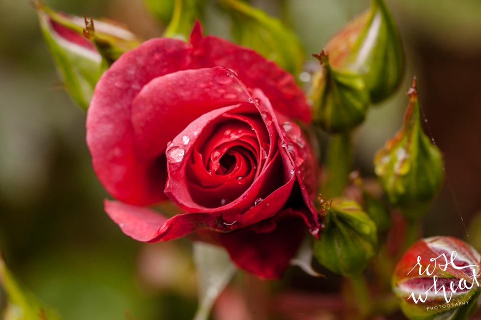 016. Cape_Arago_Oregon_Shore_Acres_Estate_Botanical_Gardens-3.jpg