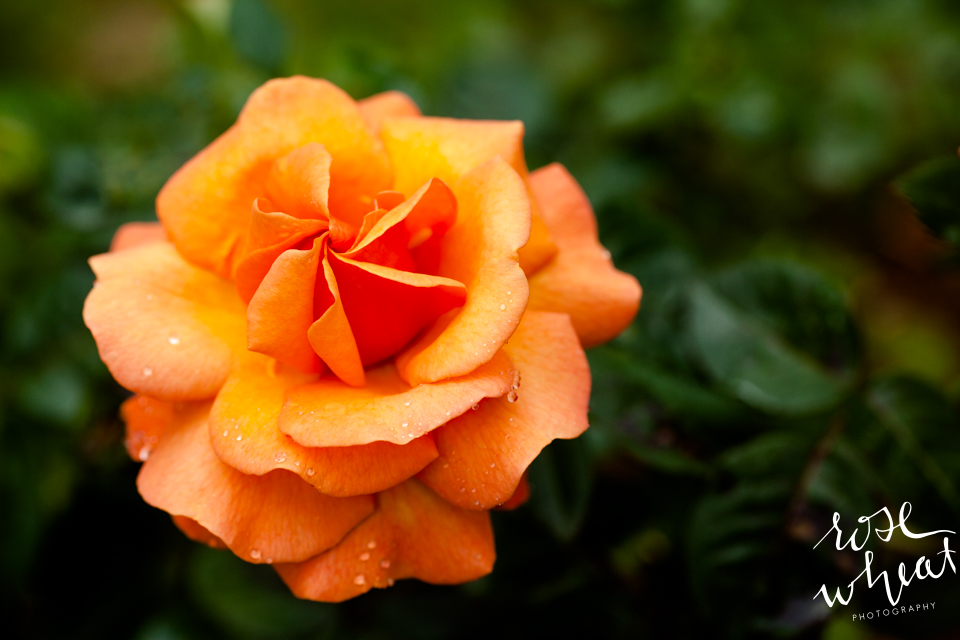 016. Cape_Arago_Oregon_Shore_Acres_Estate_Botanical_Gardens-5.jpg