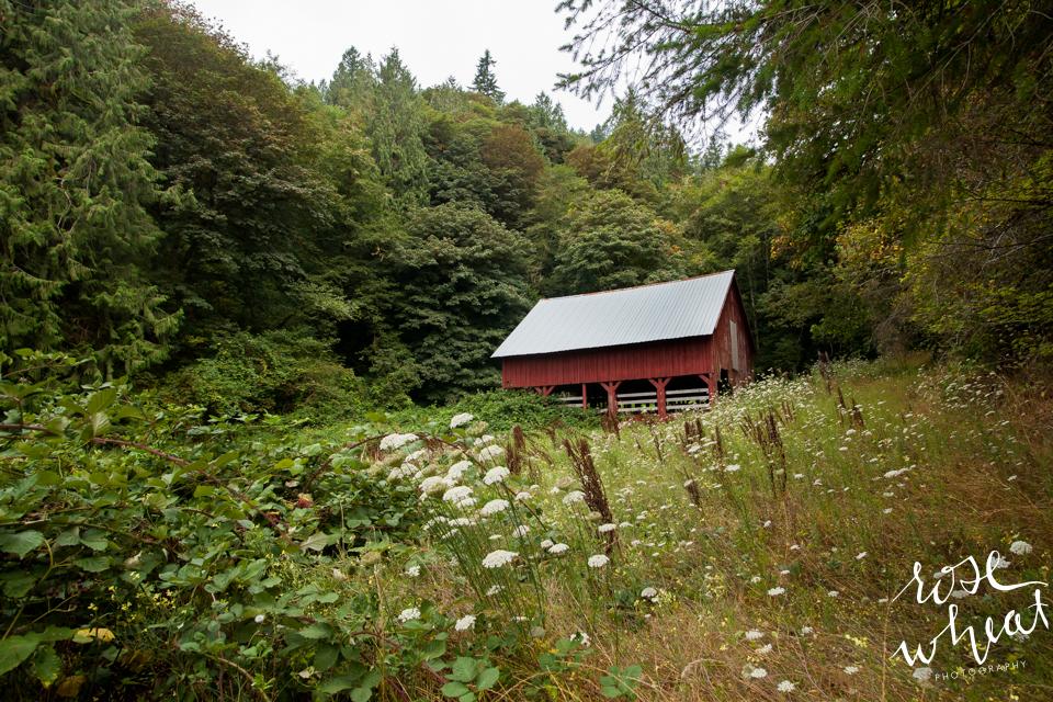 019. Oregon_Exploring_August_Fog_Forest_Barn-2.jpg