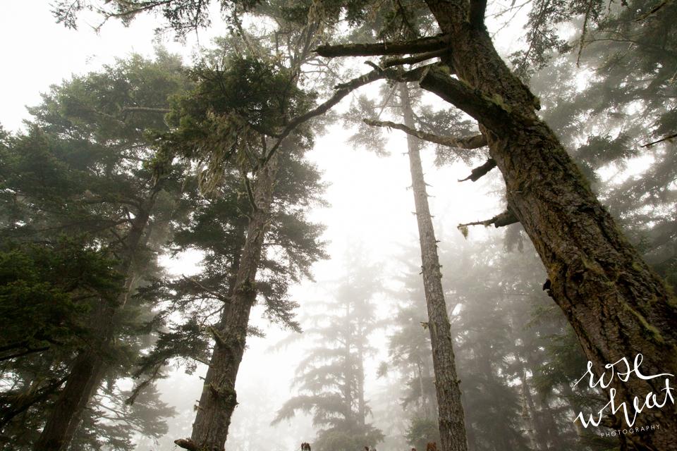 019. Oregon_Exploring_August_Fog_Forest_Barn-1.jpg