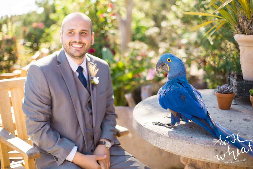 013. CARMEL_CA_DESTINATION_Wedding_Photographer_Blue_Macaw.jpg
