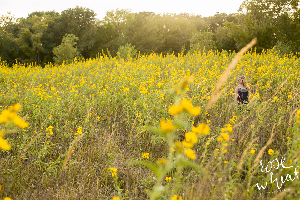 009. Kansas_Wild_Sunflower_Field-2.jpg