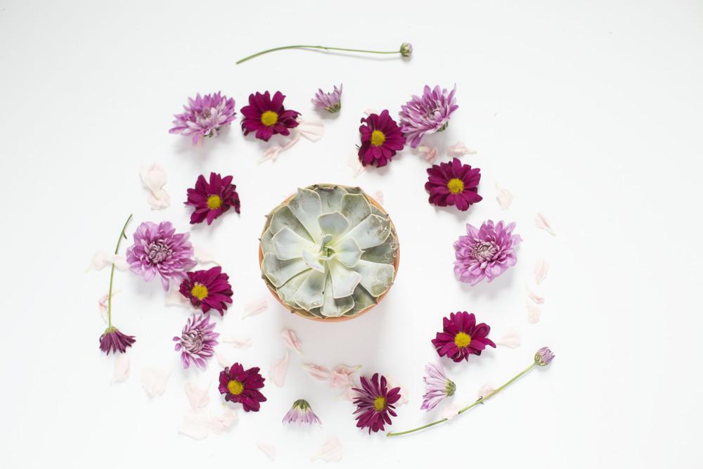 001 Succulent_Florals.jpg