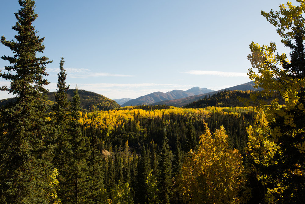 This image was taken September, 10, 2018 in Denali National Park. Fall is pretty amazing in this part of the country!