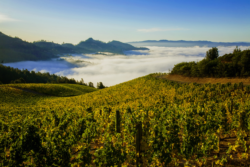 Vineyard photography: Fog rolling out