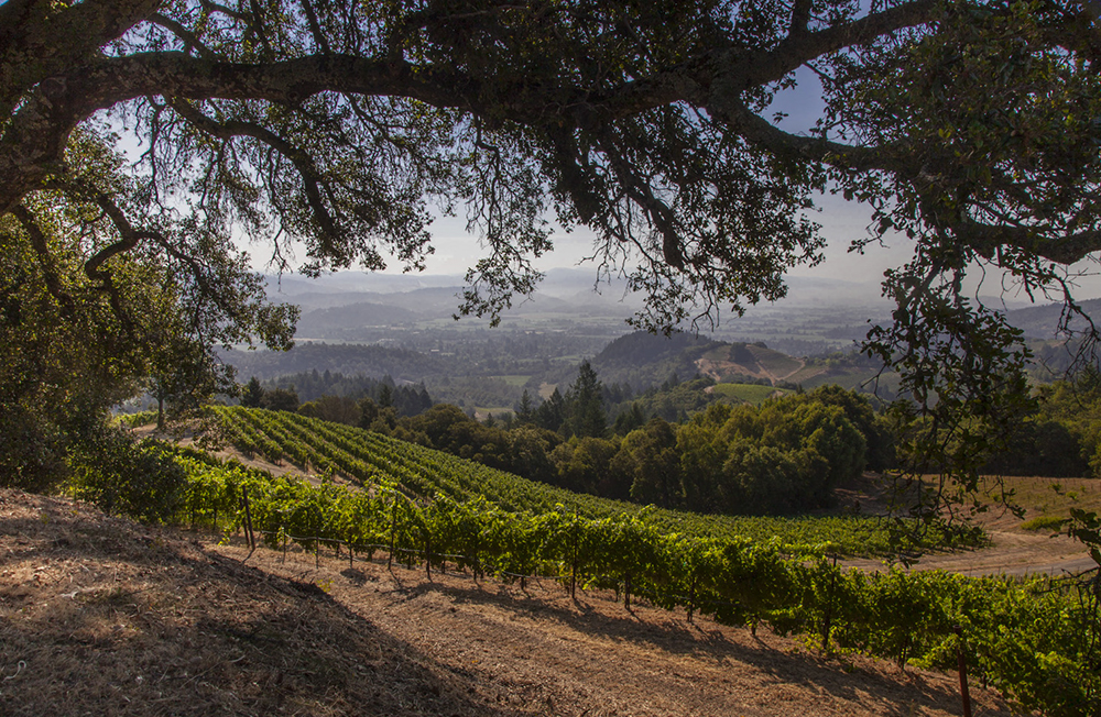 Mountainside vineyard photography