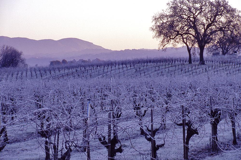 Vineyard rime
