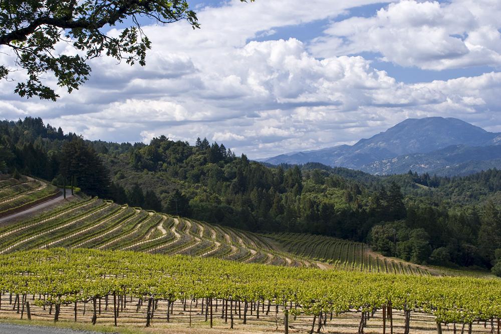 Highland vineyards