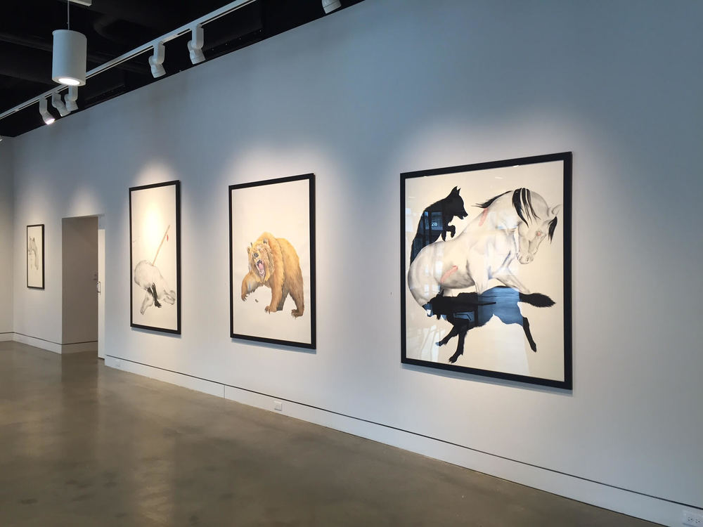 Installation view of my large drawings at iMOCA