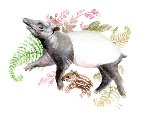 tapirweb.jpg