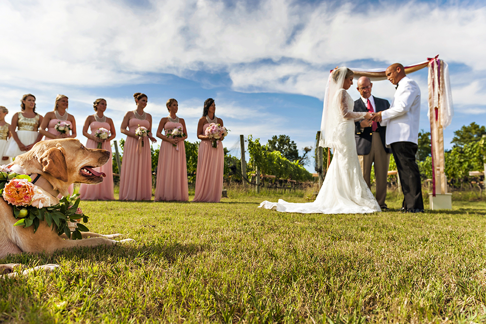 Outer Banks Wedding Venue Sanctuary Vineyards