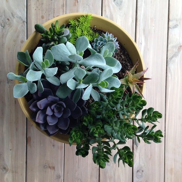 simply succulent.
