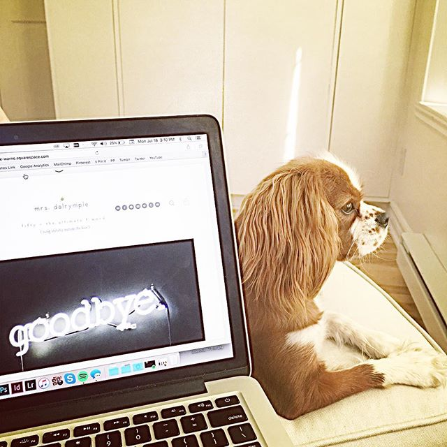 working on something bittersweet (much more bitter than sweet) with Juno lovingly at my feet #mrsdalrymple #blog #cavalierkingcharlesspaniel #puppiesofinstagram #dogsofinstagram
