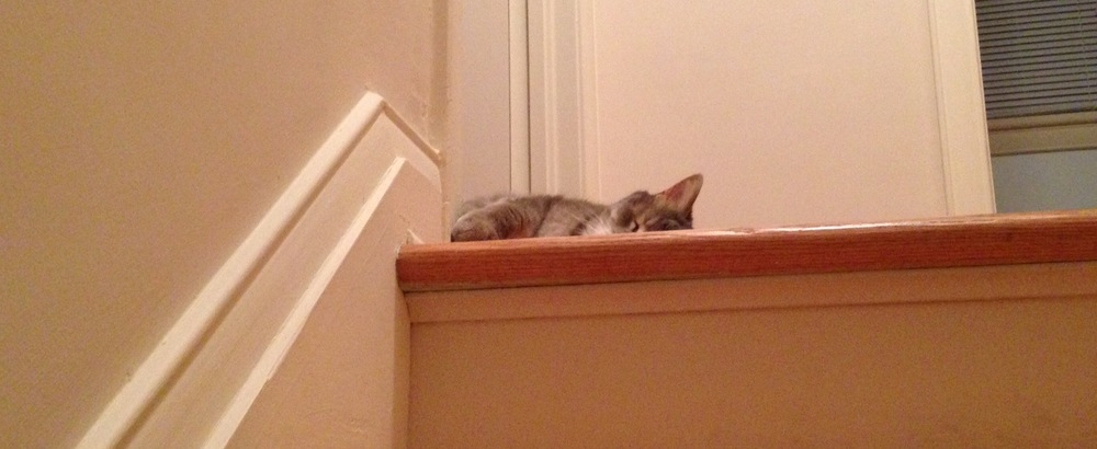 hint-of-cat.jpg