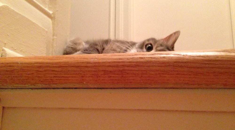 wake-up-cat.jpg