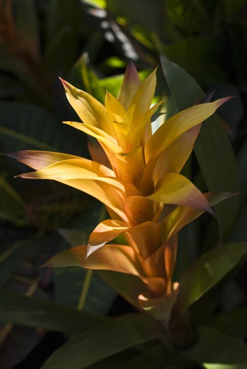 2015_Longwood Orchids_11.jpg