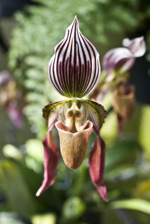 2015_Longwood Orchids_13.jpg