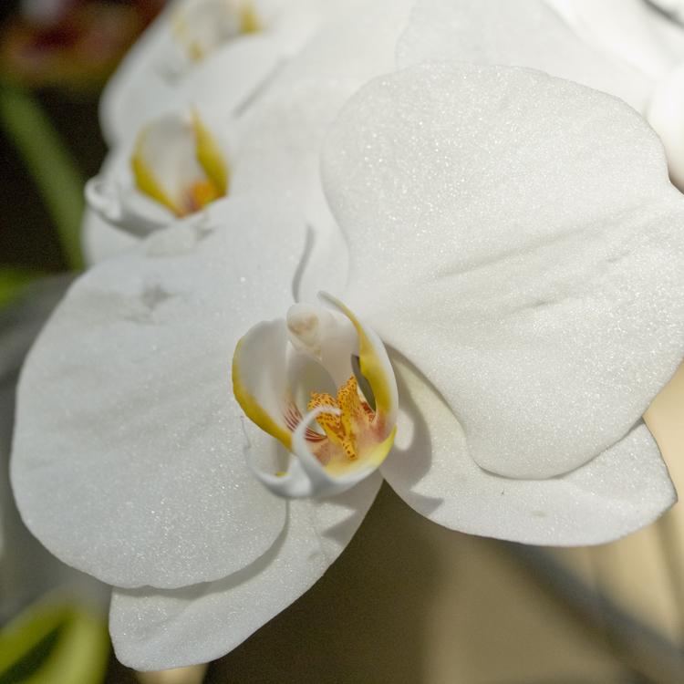 2015_Longwood Orchids_21.jpg