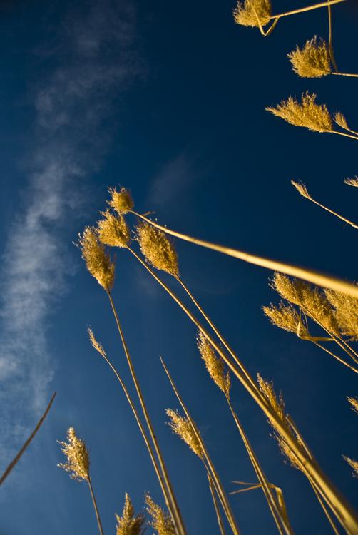 Tall Grass 03.jpg