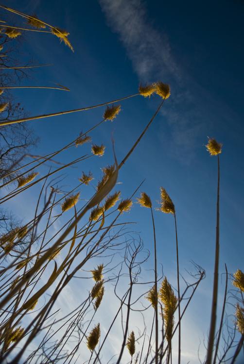 Tall Grass 07.jpg