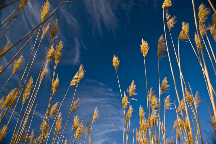 Tall Grass 09.jpg