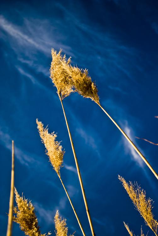 Tall Grass 10.jpg