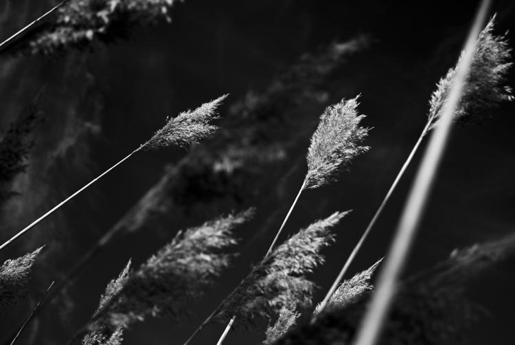 Tall Grass 12.jpg