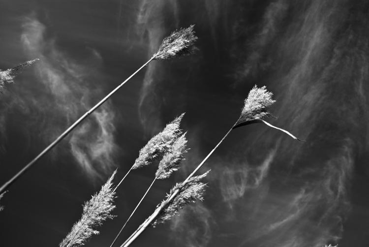 Tall Grass 16.jpg