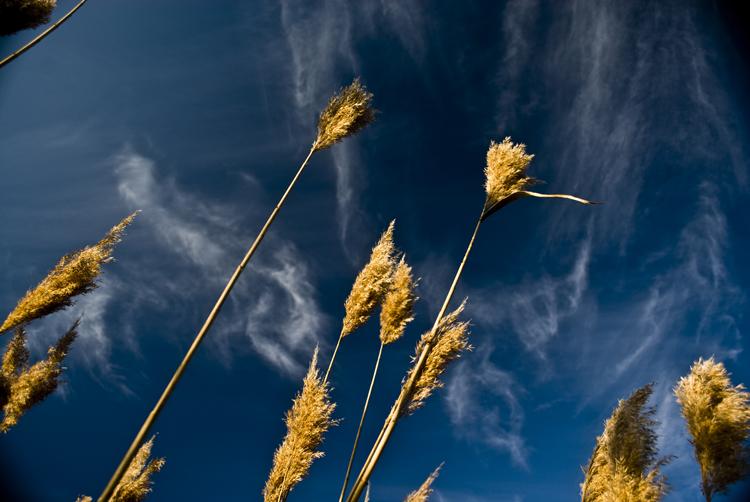 Tall Grass 17.jpg