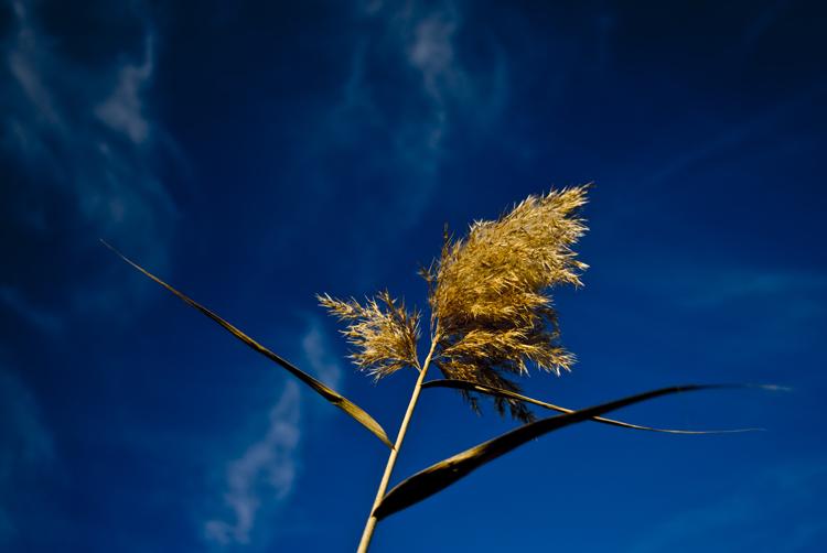 Tall Grass 18.jpg