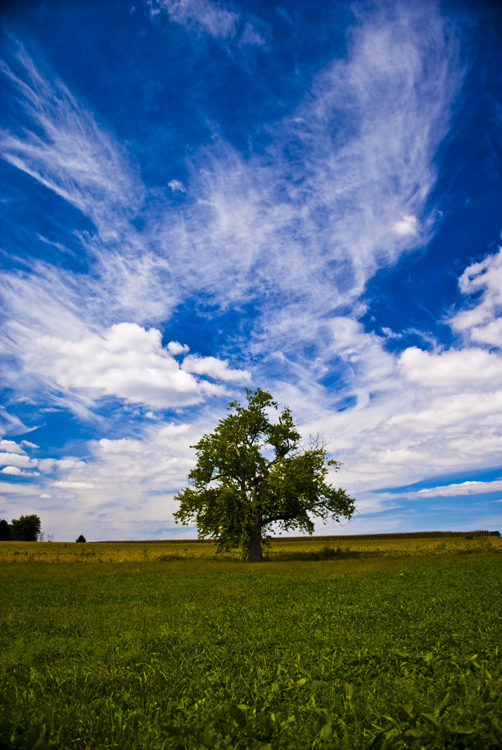 2012 09 15 Longwood Gardens 26.jpg