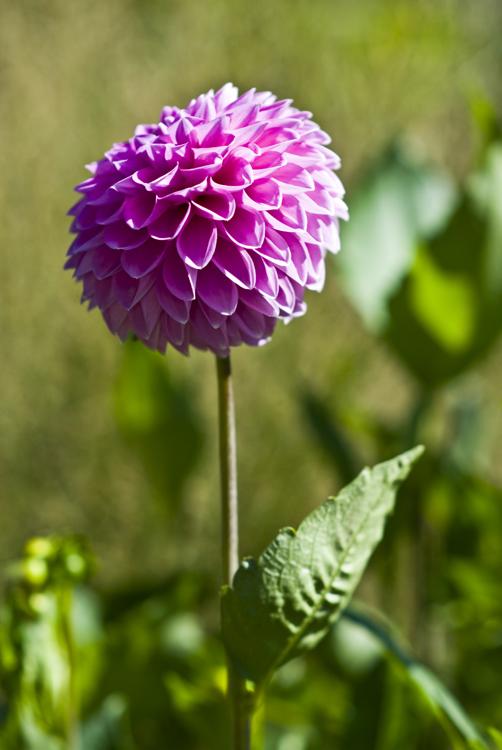 2012 09 15 Longwood Gardens 02.jpg