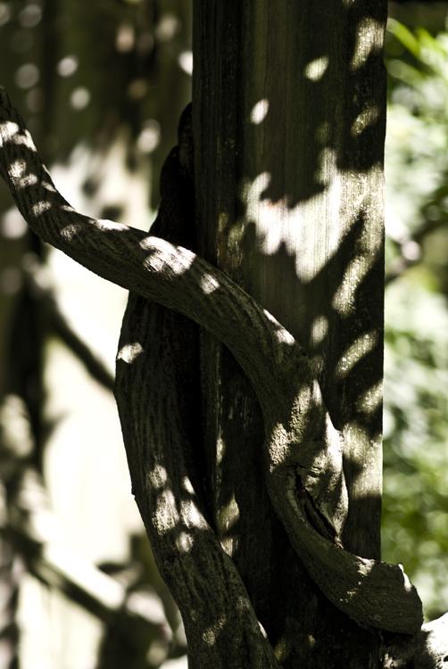 2012 09 15 Longwood Gardens 04.jpg