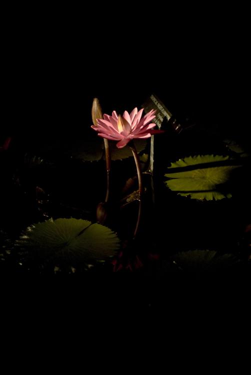 2012 09 15 Longwood Gardens 25.jpg