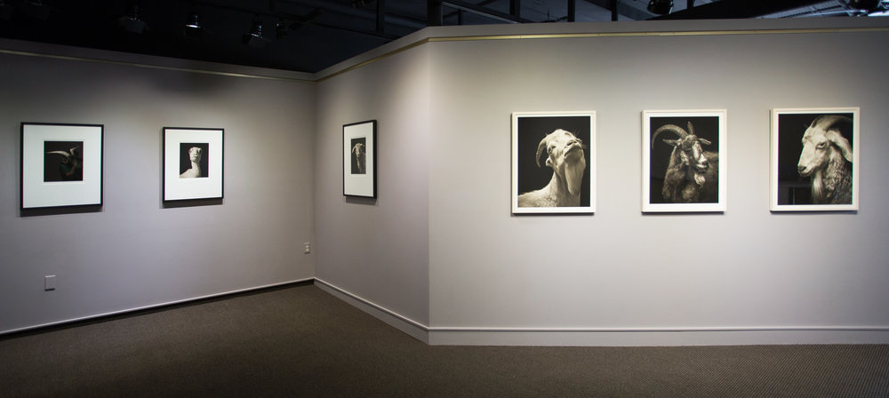 Pictura Gallery