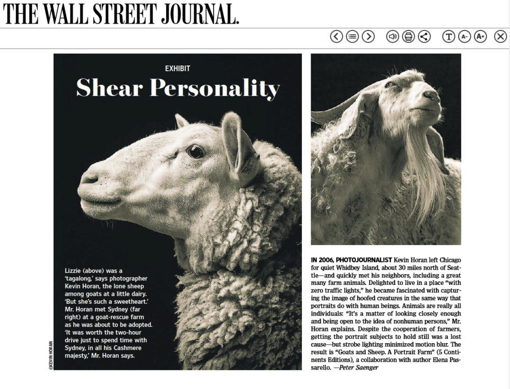 wsj Shear Personality 3-2-19.png