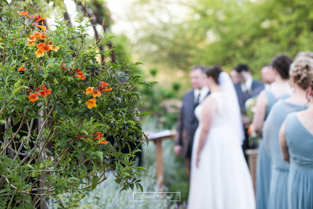 Phoenix wedding at the Desert Botanical Gardens-1