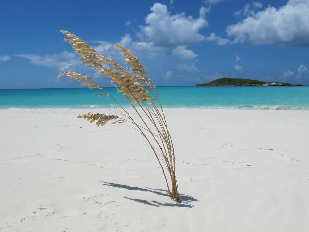 exotic relaxation sunshine coast find the nearest brothel
