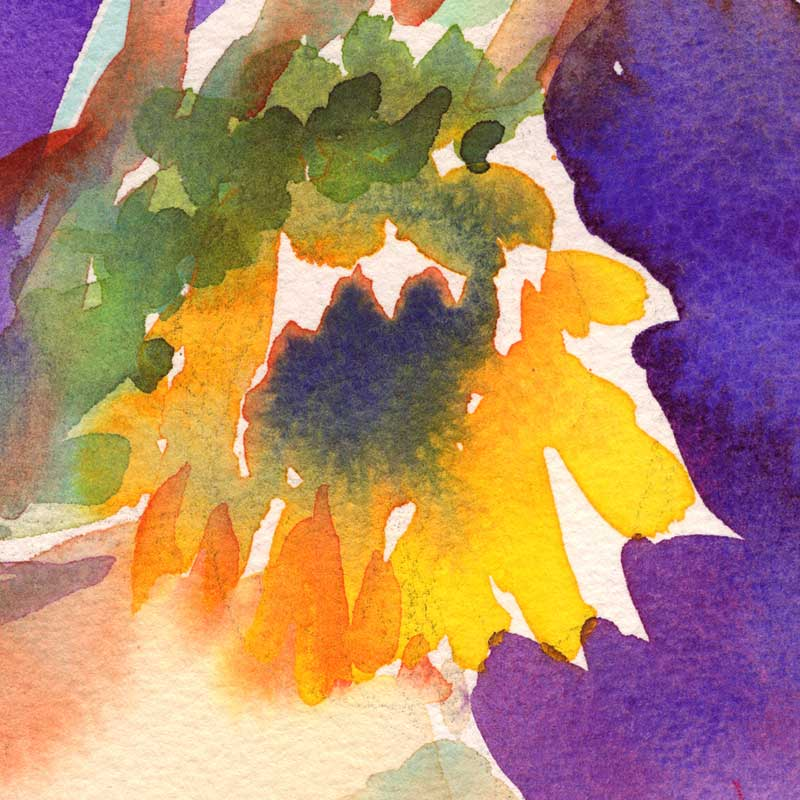 closeup of sunflower painting in watercolor