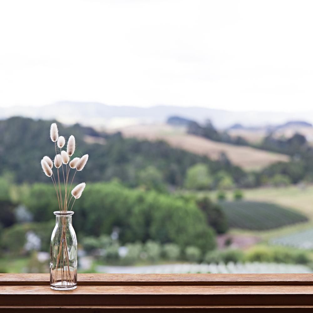 NZ_16_ig.jpg