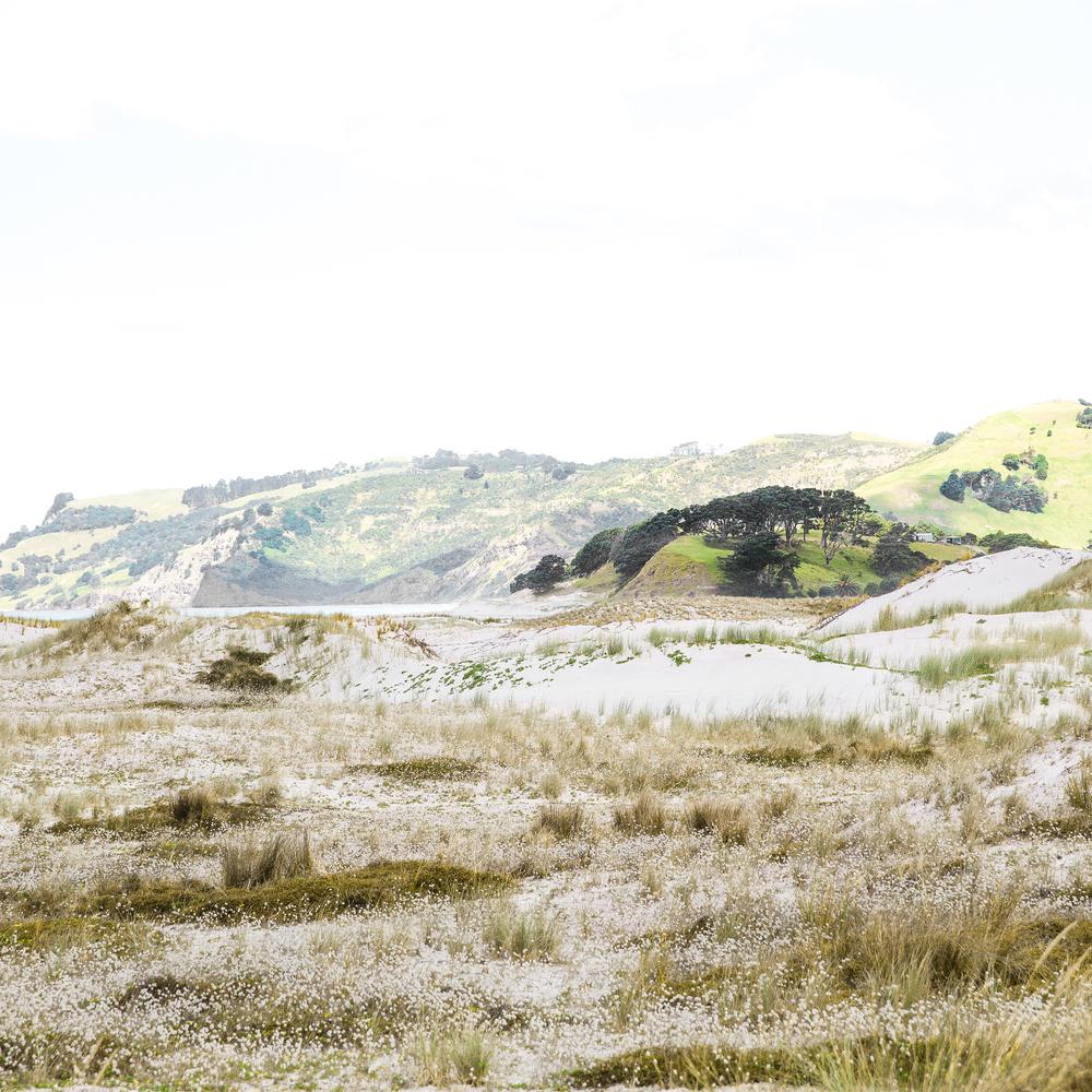 NZ_17_IG.jpg
