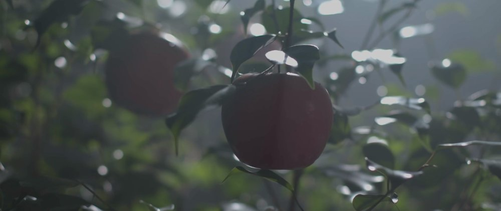 The Genesis story doesn't say what type of fruit was forbidden, but it's commonly portrayed as an apple.