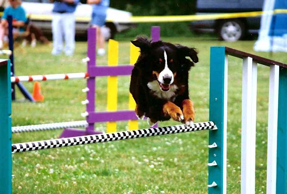 Roscoe jumping.jpg