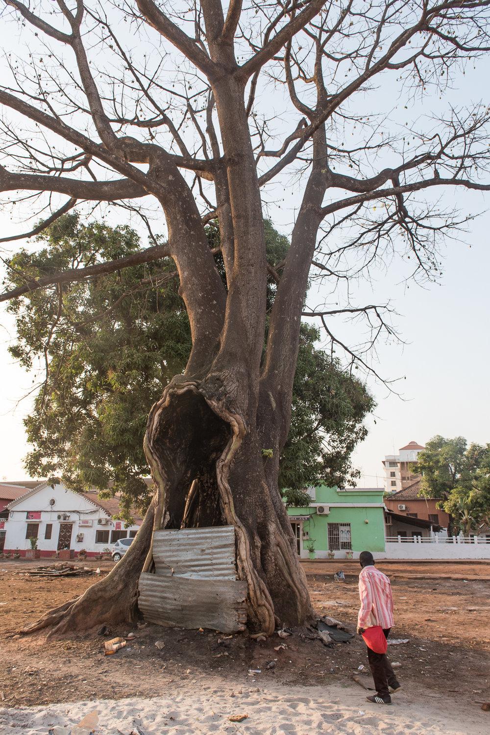 2018_02_Bissau_Environmental_0153.jpg