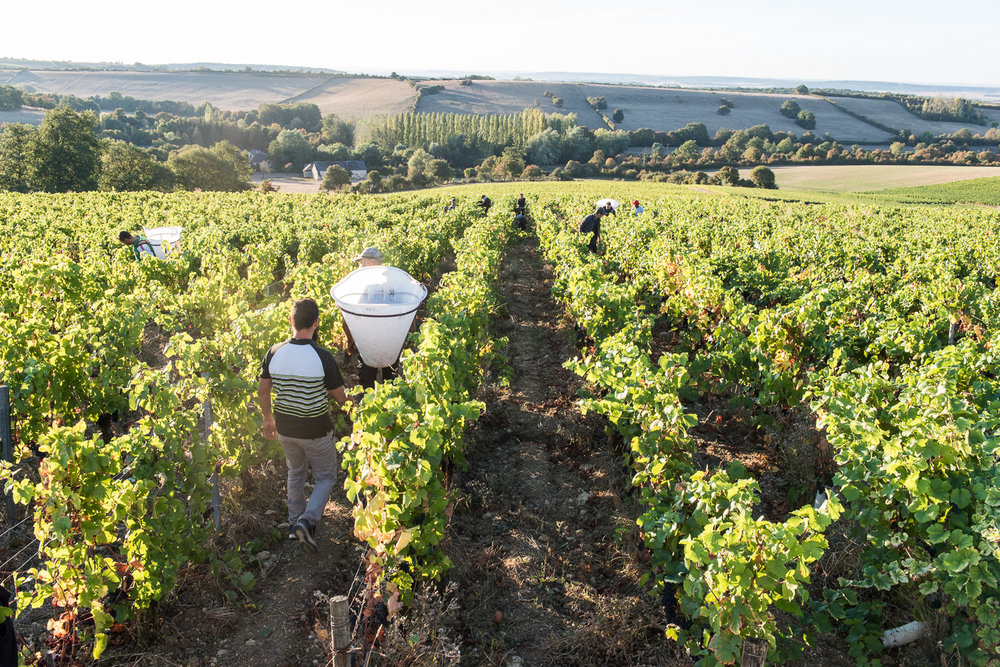 2018_Sept_Vendanges_DomaineMinchin_1704.jpg